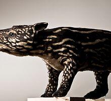Malayan Tapir by Marcel Lee
