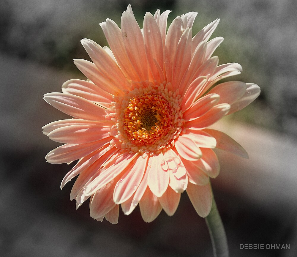 A GLOW OF COLOR by DEBBIE OHMAN