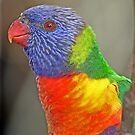 Rainbow Lorikeet by Robyn Carter