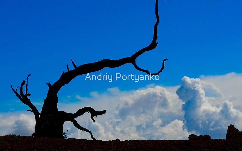 Still in Hope by Andriy Portyanko