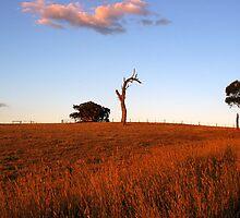 Sunburnt Australia by Michael Humphrys
