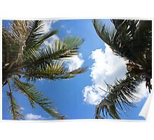 Palm trees in the sky, Florida Poster