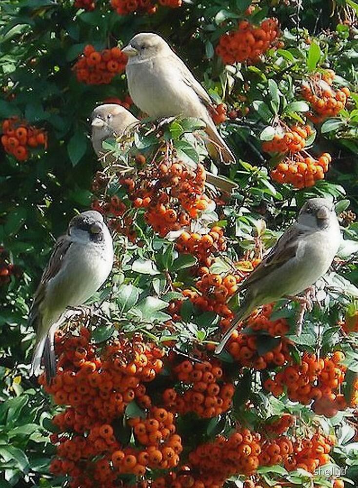 Birds Galore by shellyb