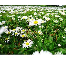 lovely summers day Photographic Print