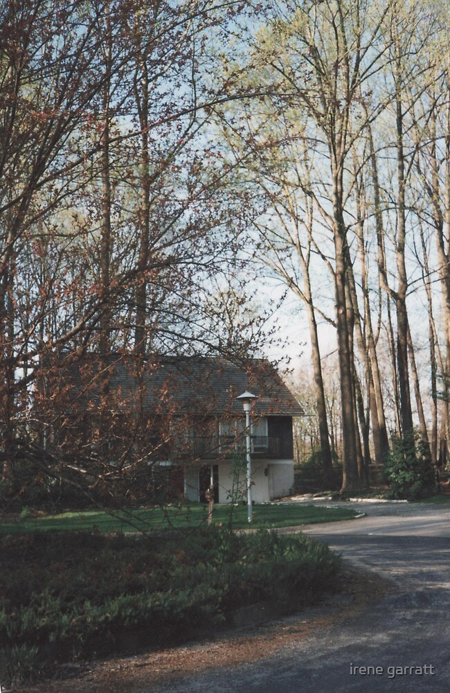 A woodland setting by irene garratt