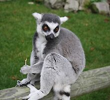 Photogenic Lemur by MyPixx