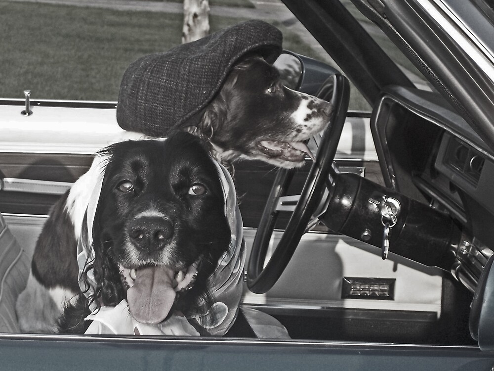 Seventies Dogs by minnielee