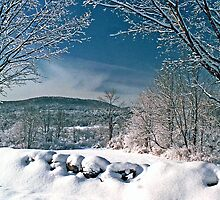 Winter Wonderland by Judith Winde