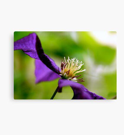 Purple Macro Canvas Print
