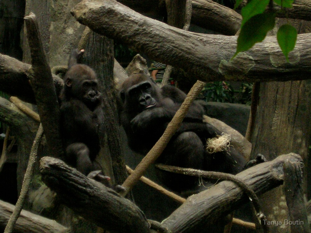 Gorilla and Baby by Tanya Boutin