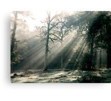 Sleep Walking Canvas Print