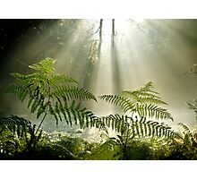 Woodland Ferns Photographic Print