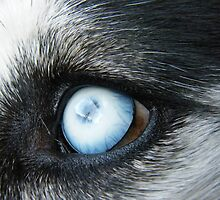 Husky Eye by Tanya Boutin