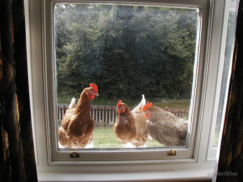 chickens  by xxhelen90xx