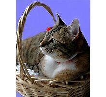 Kitten In Basket Photographic Print