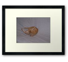 You know this would be easier with the Twister Board... Framed Print