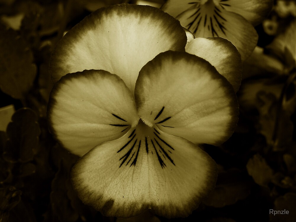 Pansy~Sepia by Rpnzle