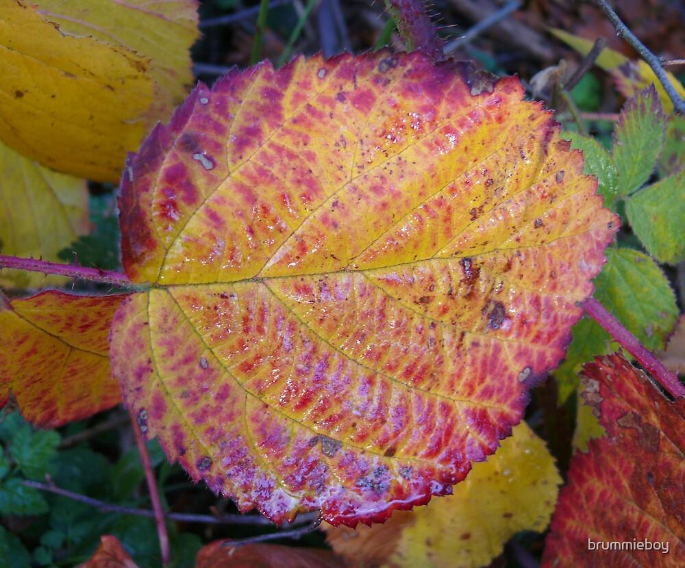 Autumn leaves (1) by brummieboy