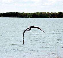 Pelican by rebeccamaree