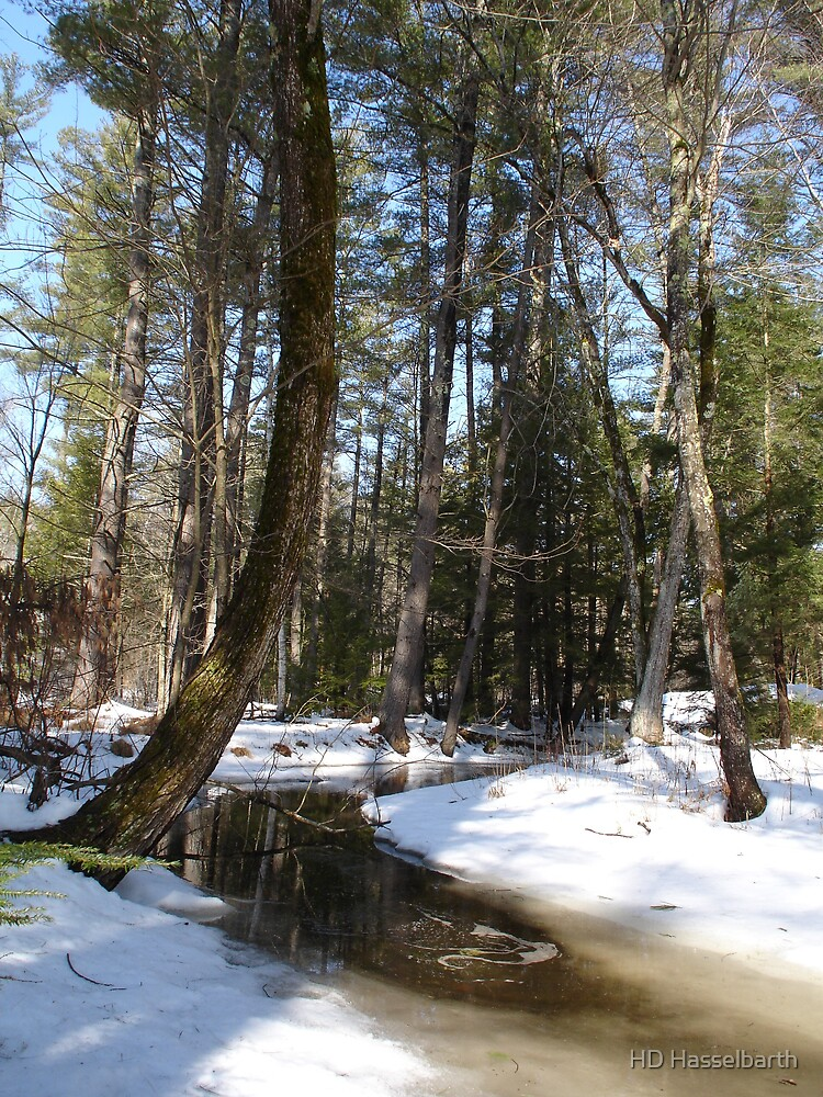 Winter Woods in New Hampshire by HD Hasselbarth
