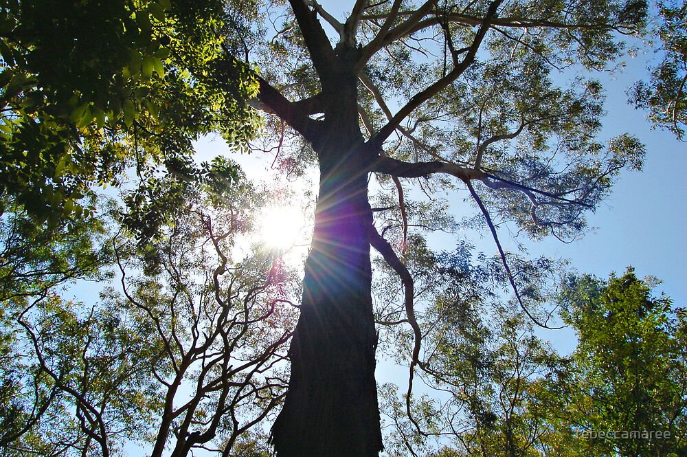 sunshine by rebeccamaree