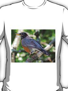 Robin in Spring II  (141407070461VA) T-Shirt