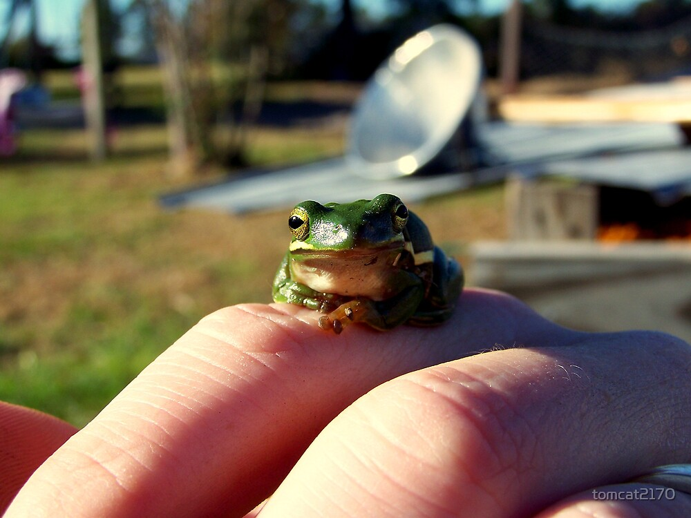 froggy on my finger by tomcat2170