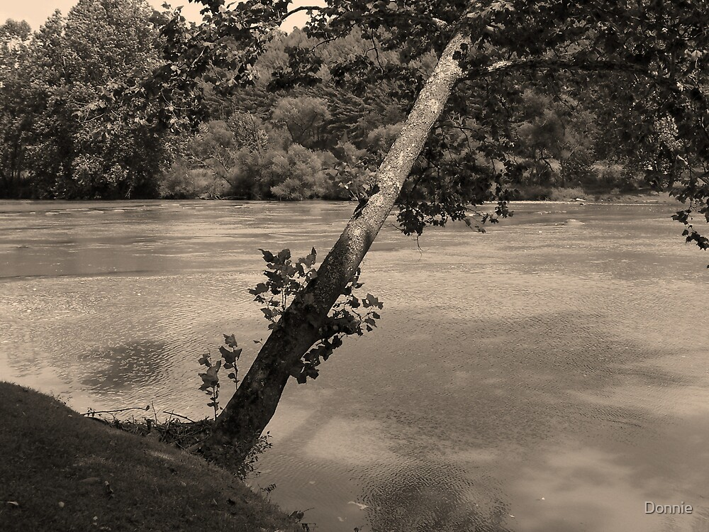 Nature's Shade in Sepia Tone by Donnie