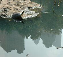 metro turtle by IanBriscoe