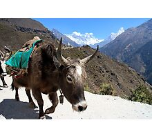 Mt. Everest and Ama Dablam between the horns of a yak by Roi Brandeis Photographic Print