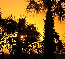 Sunset and Palms by Edward Harmon II