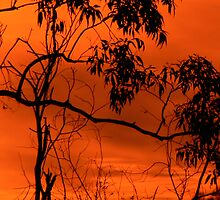 Sunrise at Nerang  4.15 am #2 by Virginia McGowan