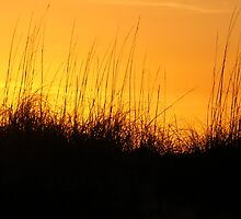 Sea Oats Sunset by Edward Harmon II