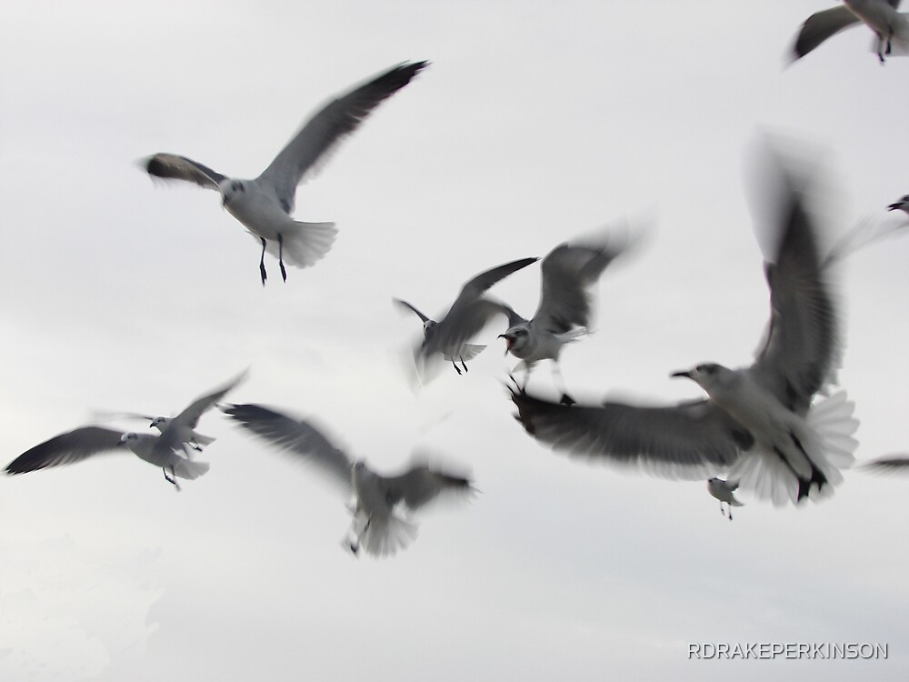 GULLS IN FLIGHT by RDRAKEPERKINSON