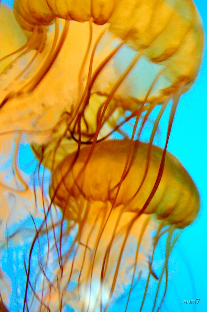 Jelly Fish Series no.7 by aum7