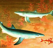 Blue Shark by Vintagee