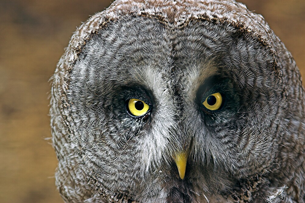 Inquisitive Owl by kitlew