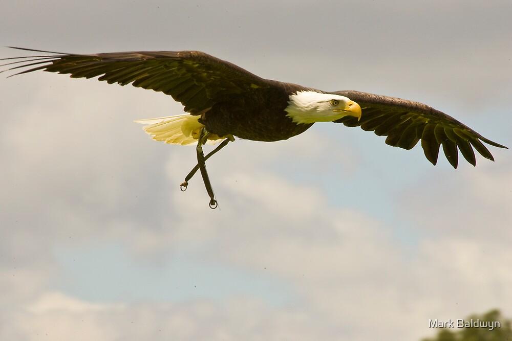 Bald Eagle by Mark Baldwyn