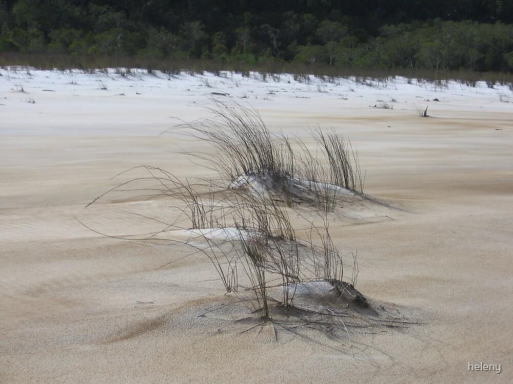 wispy grass Lake Boomanjin by heleny
