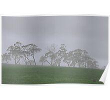 Misty Gums Poster