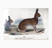 Woodland Rabbit T-Shirt