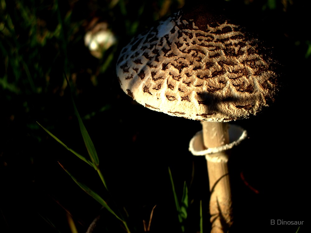Mushroom by Bryan Davidson