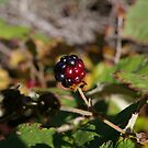 Blackberry Bubble by Adrena87