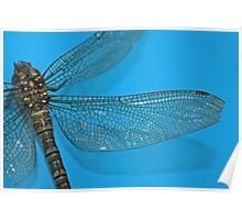 Dragonfly on blue Poster