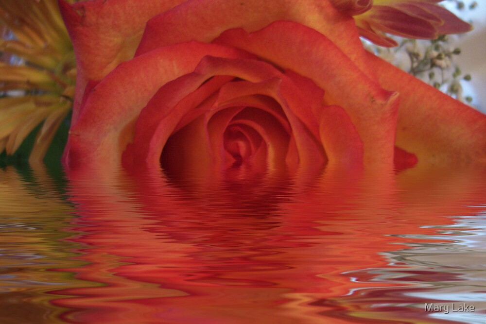 Flooded Rose by Mary Lake