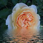 Flooded Rose 2 by Mary Lake