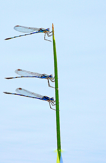 Three Of A Kind by EOS20