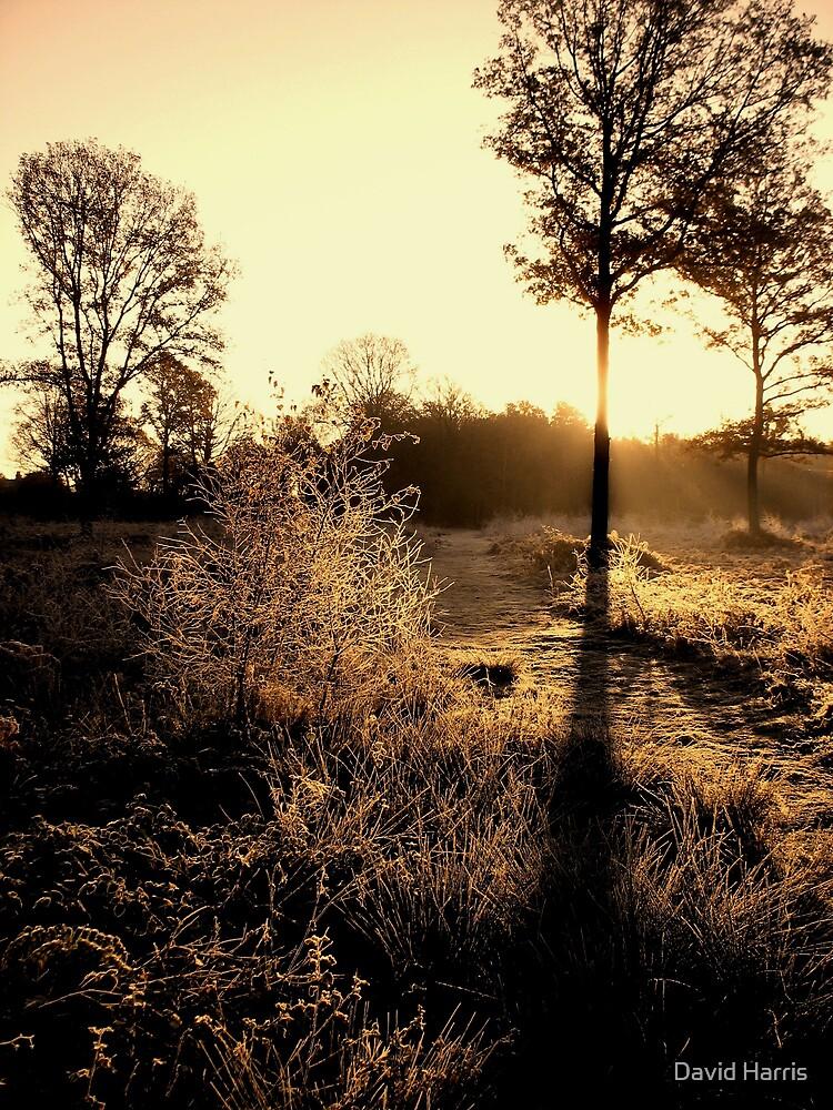 Morning glory in winterland by David Harris