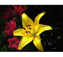 jaune et rouge Photographic Print