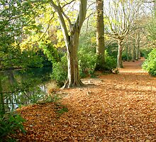 Carpet of Leaves by Anthony Hedger Photography